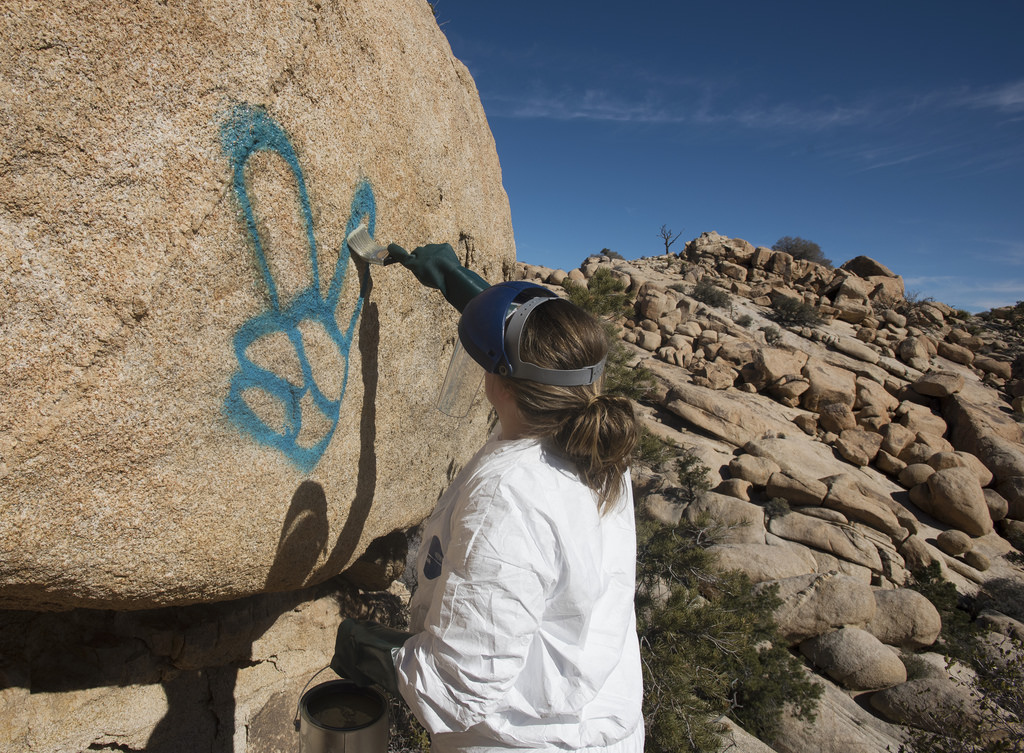 A park ranger is applying elephant snot graffiti remover to a rock that has been vandalized with spray paint amid the government shutdown. Removing graffiti is tedious work that requires training, approved cleaning materials, and heavy equipment.