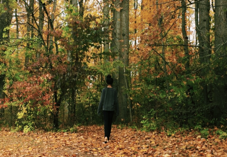 WCHS student takes a walk in forest during the fall. The leaves turn orange at the trees which is a sign that winter break is rapidly approaching.
