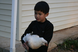 Chickens remind local family of a distant past